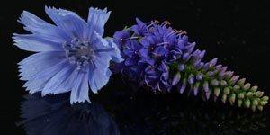 Fiori blu e viola