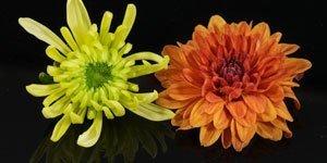 Fiori giallo e d arancio