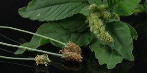 Fiori marrone e verde