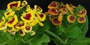 Fiori multicolore