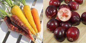 Frutti verdura
