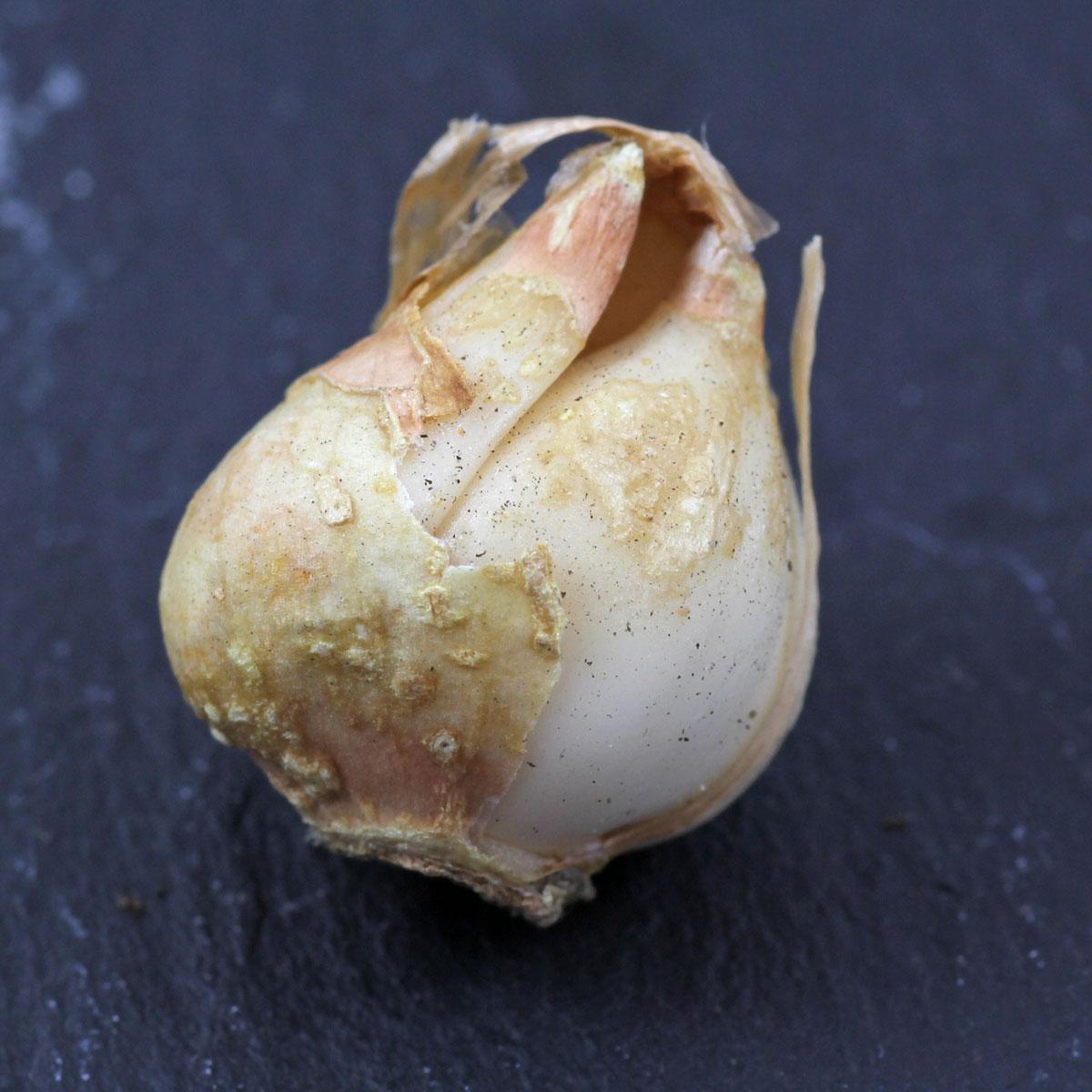 Leucocoryne ixioides